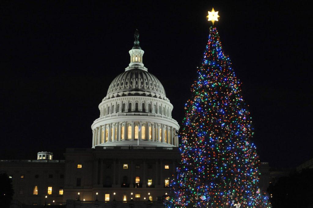 Árbol de Navidad | Arbol de navidad Natural del capitolio USA